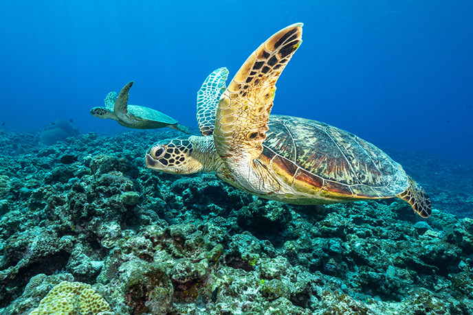 プラスチック 問題 海洋 マイクロプラスチックが人体に与える影響は?